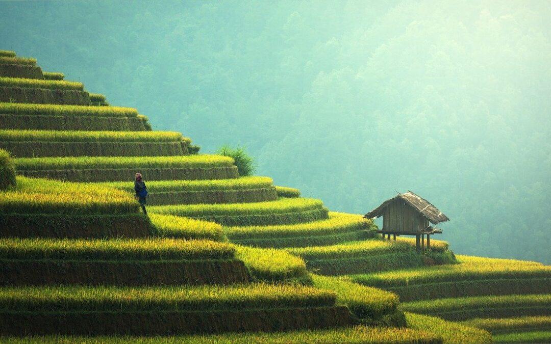 Tag på en lækker rejse til Thailand